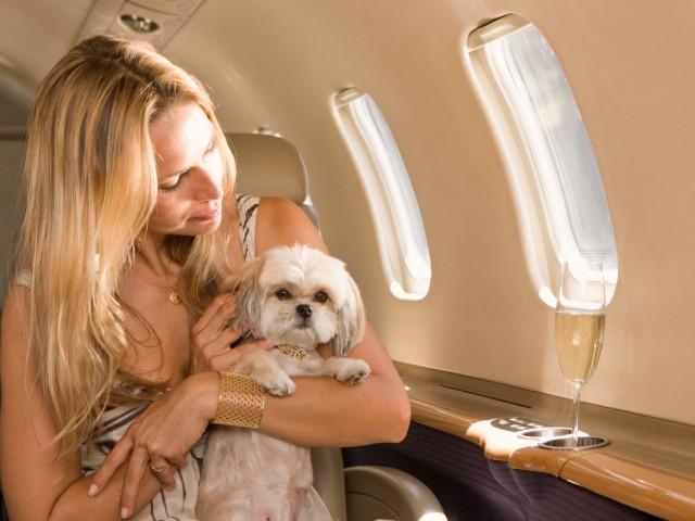 Pet Friendly Charter Flights