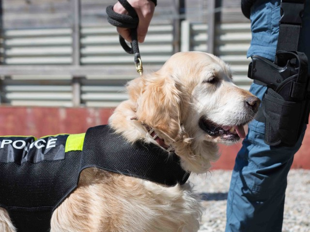 Police dog with distinctive