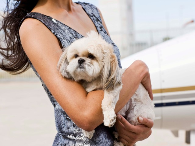 How to Charter a Pet-Friendly Private Jet